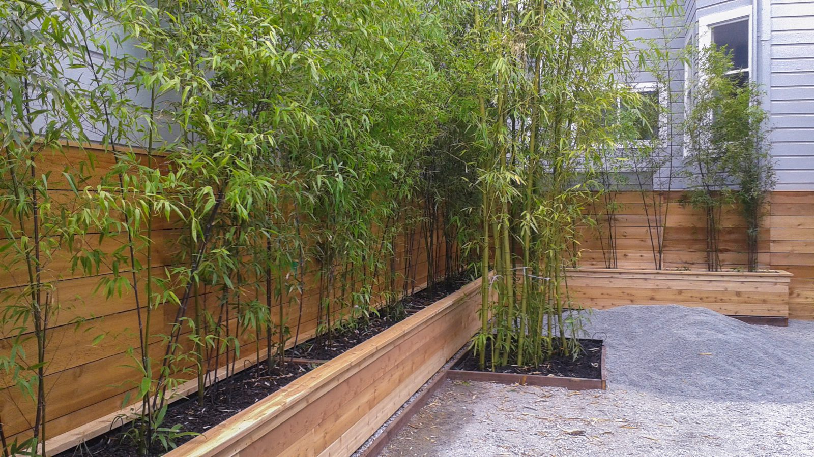 Containers Planter Boxes For Bamboo Bamboo Sourcery Nursery