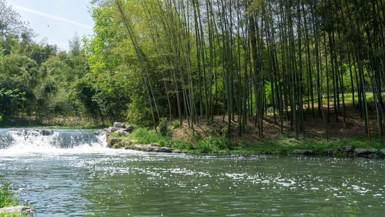 bambou riviere