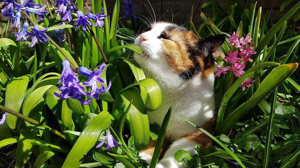 Chat ave de plantes