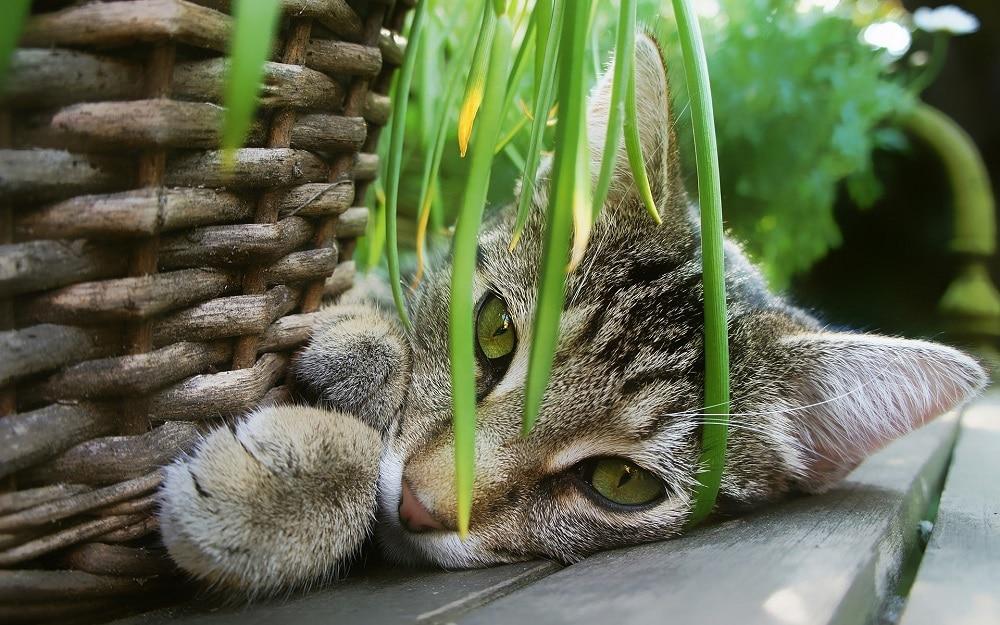 Chat à coté d'une plante