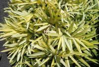 10 Raisons pour Lesquelles Votre Bambou ne Pousse Pas