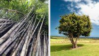 Étonnant: Le bambou est-il un Arbre ou une Plante ?