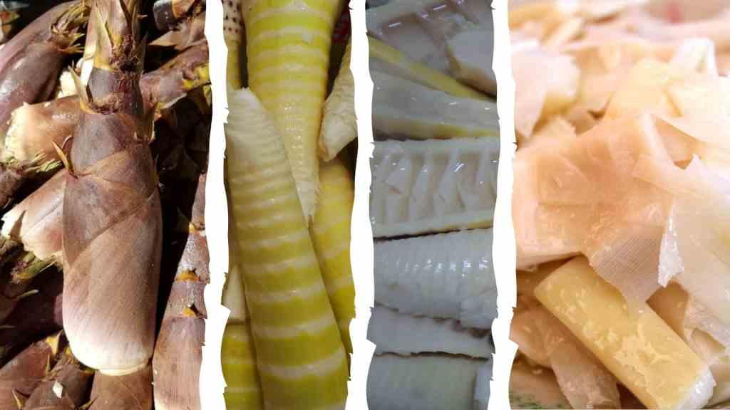 Manger des pousses de bambou comestibles