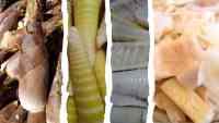 Avant de Manger du Bambou: Ce que vous Devez Savoir