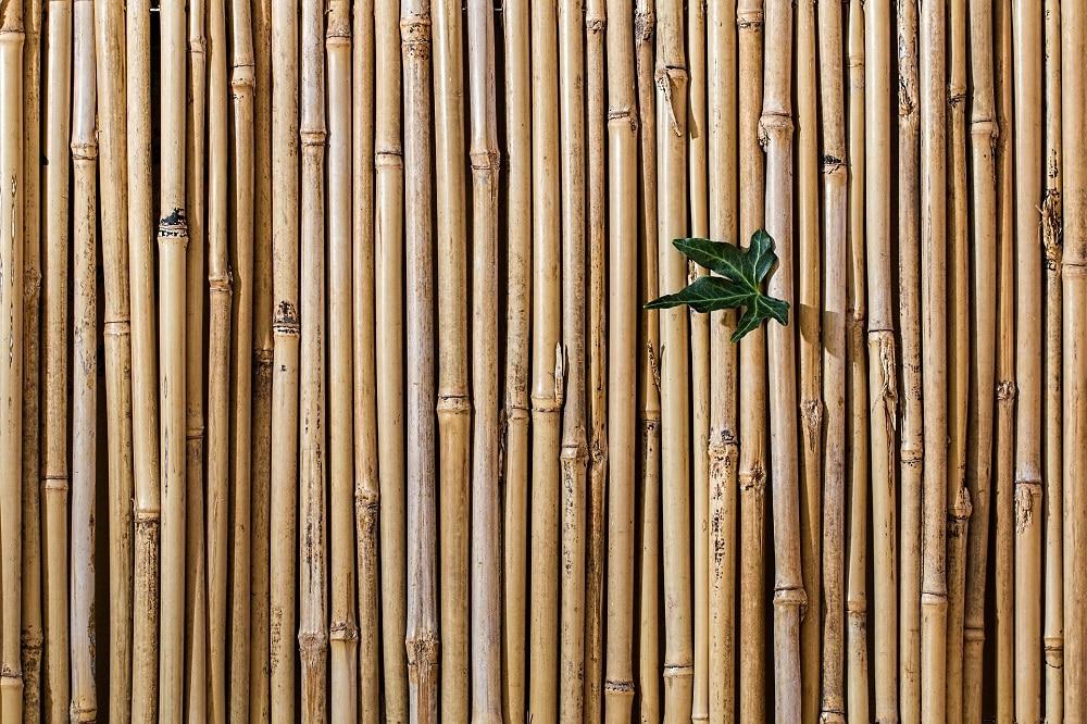 Barrière de bambous de faible diamètre