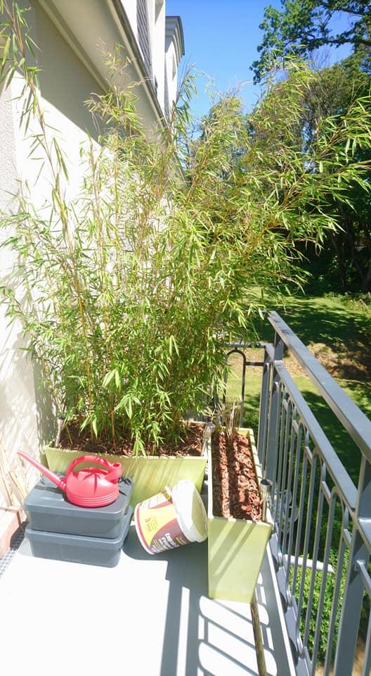 Haie de bambou brise vue 2