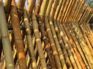 Comment Faire Sécher un Bambou Vert ?