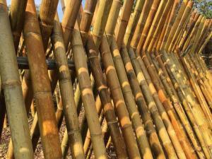 Séchage des chaumes de bambou