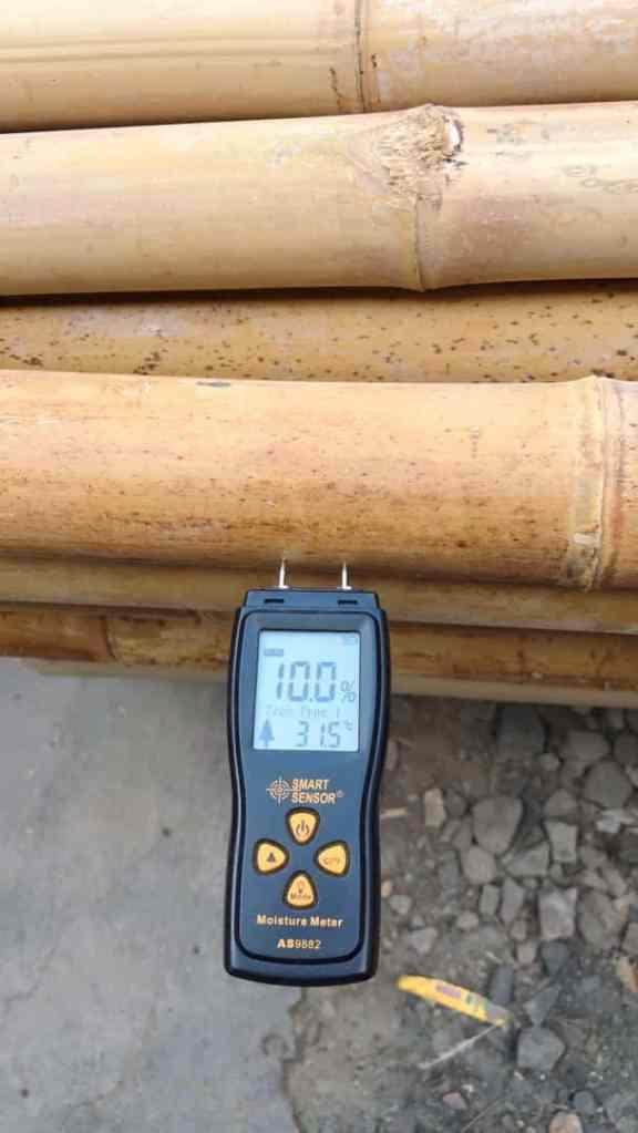 Chaume de bambou moso à 10,0% d'humidité (Photo: Grace Jiang)