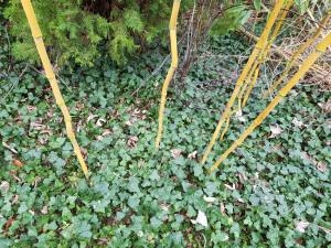 Trouver des bambous gratuits dans la nature