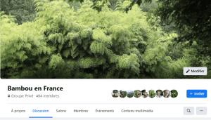 Bambous pas cher - Mon groupe facebook Bambou en France