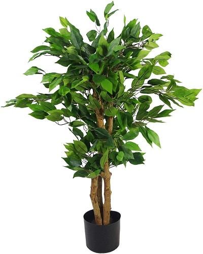 Ficus artificiel