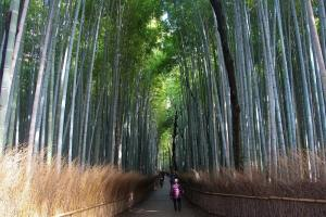 La forêt de bambous Arashiyama au Japon