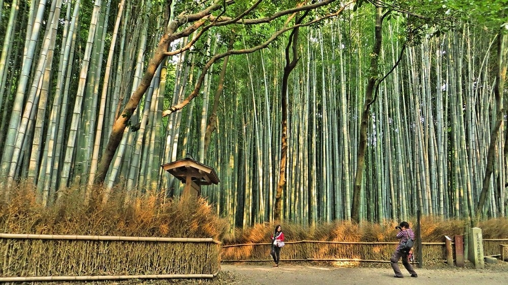 Forêt de bambous Arashiyama au Japon