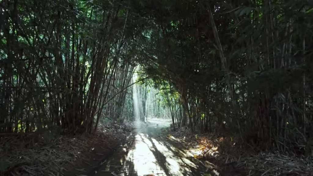 Forêt de bambous Pengliguran