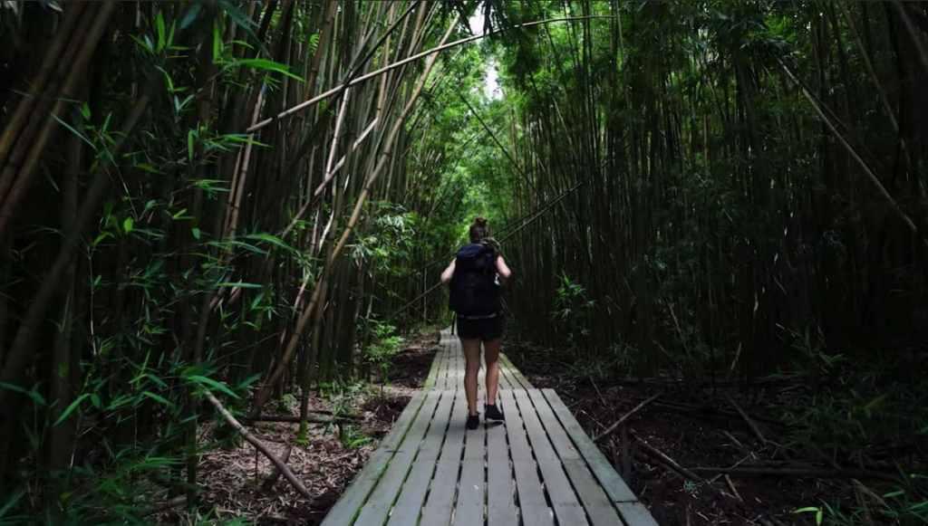 Forêt de bambous Pipiwai Trail