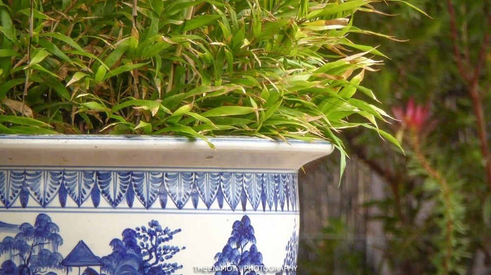 Quel pot pour bambous