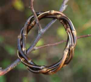 Bracelet avec des rhizomes de bambou