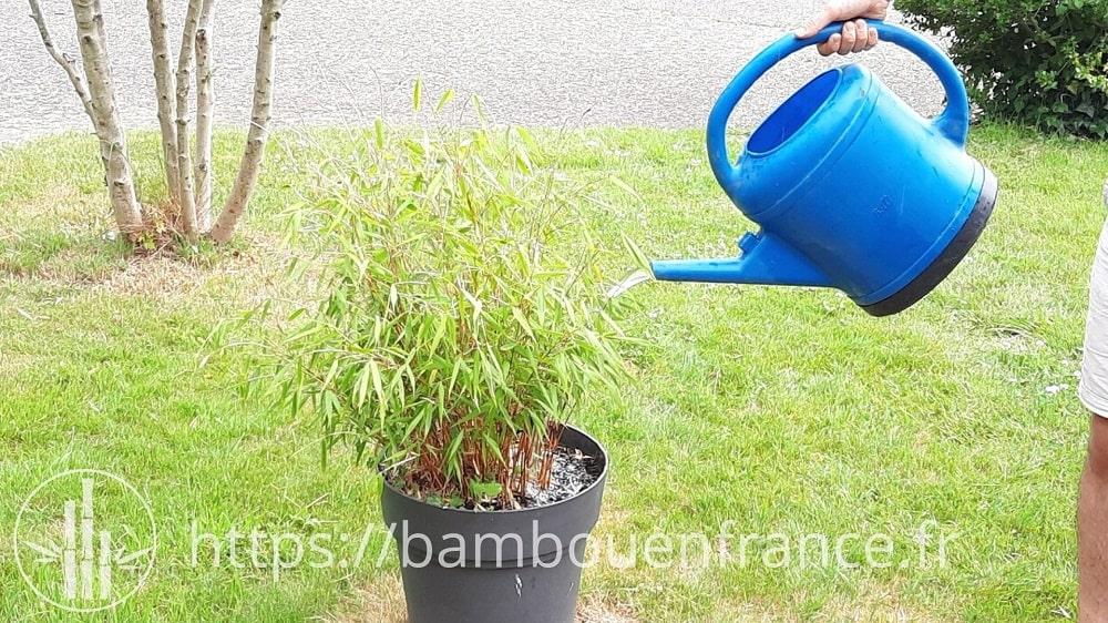 Arroser bambou