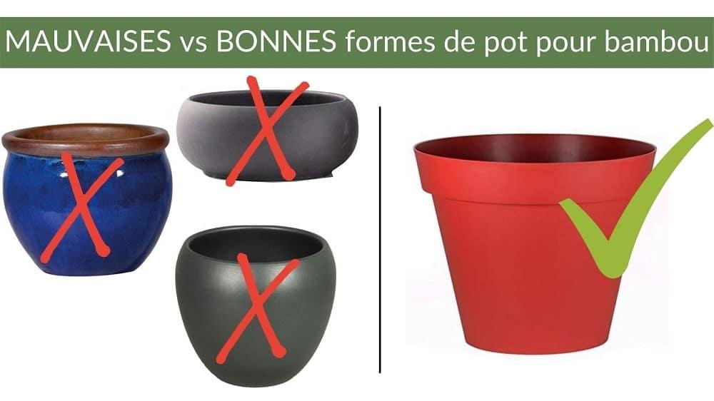 pot pour bambou bon et mauvais