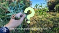 Planter une Tige de Bambou sans Racines ni Rhizomes: C'est Possible ?