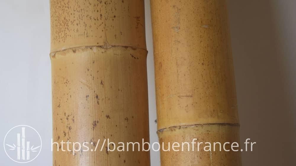 Tiges de bambou pour la salle de bain