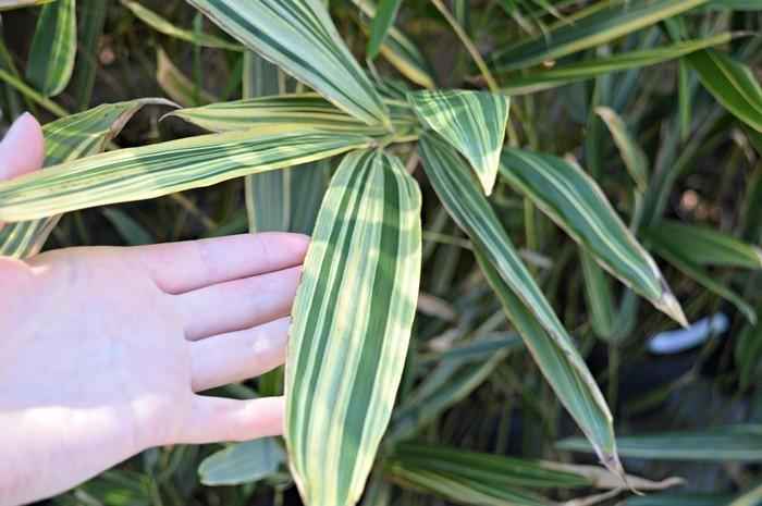 Bambus do wnętrz