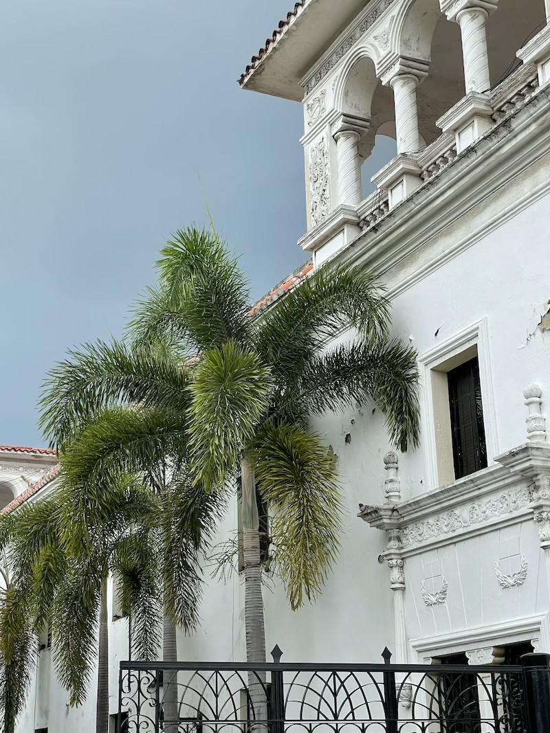 palma lisi ogon wodyeitia dominikana