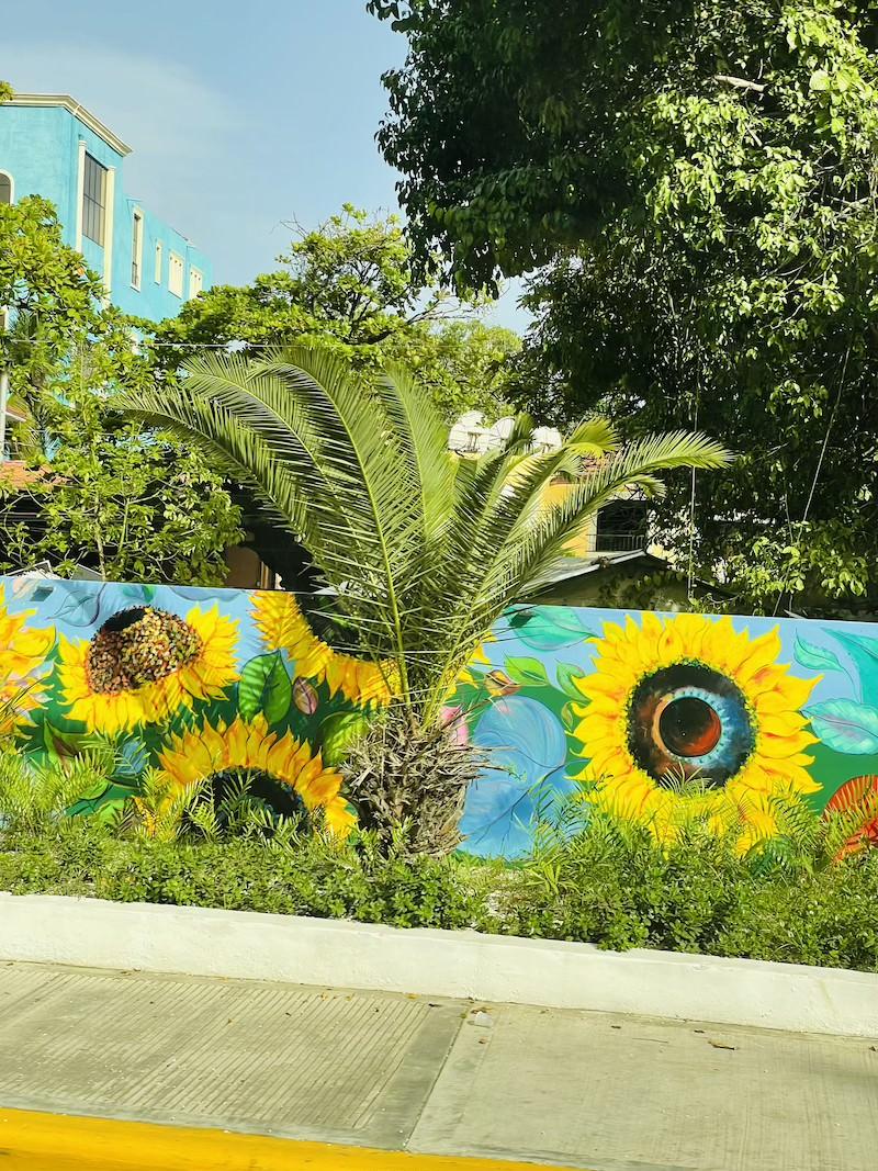 palma-kanaryjska-daktylowiec-dominikana