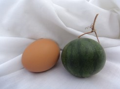 Really, eggs the size of watermelons? come and find out for yourself!