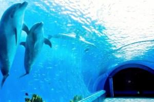 イルカトンネル