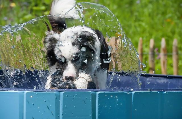 Hitze und Hund - Hunde gut durch den Sommer bringen