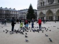 Pigeons like food. People have food. Pigeons therefore like people.