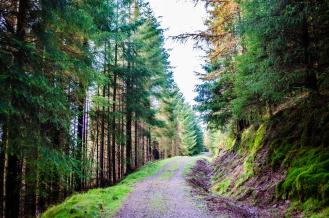 Through the woodlands
