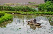 Marsh in Taipa