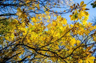 Sunny day, blue skies, golden leaves!