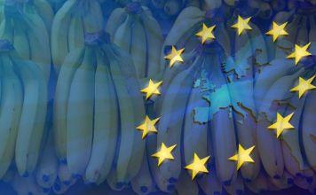 El banano ecuatoriano a seis meses del Acuerdo Comercial con la UE