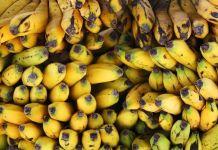 Caída de precios del banano para exportadores en Ecuador