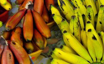Nuevos tipos de banano para luchar contra el mal de Panamá
