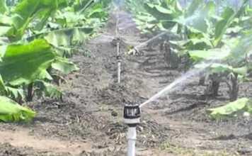 Falta de agua como problema futuro en la producción de banano