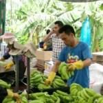 Suben los precios del banano chino
