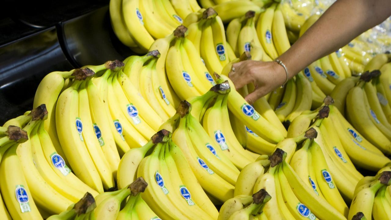 Los mayores exportadores de banano del mundo - Cluster Banano