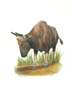 "The Year of the Oxen, 2009, Watercolor on paper, 9""x15"". Copyright Rebe Banasiak, The Brush Hilt and Banasiak Art Gallery."
