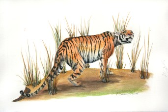 "The Year of the Tiger (Bengal tiger), 2008, Watercolor on paper, 9""x15"". Copyright Rebe Banasiak, The Brush Hilt and Banasiak Art Gallery."