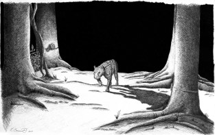 Illustration of a jaguar walking in front of a camera trap. 2004, Ink on paper, 11x17. Copyright Rebe Banasiak, The Brush Hilt and Banasiak Art Gallery.