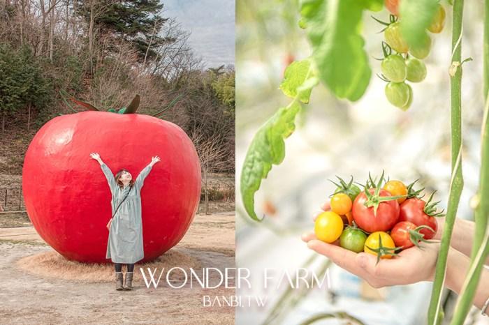 東北福島景點:WONDER FARM番茄園採10種彩色番茄,在巨大番茄拍可愛童話照