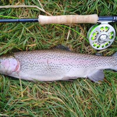 BAC - 2.5 lbs Corbet Lough Rainbow caught by Brendan Downey on 18 March 2021