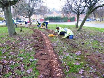 Rotarians add 15,000 crocus corms to Broughton Road Roundabout 1st November 2018