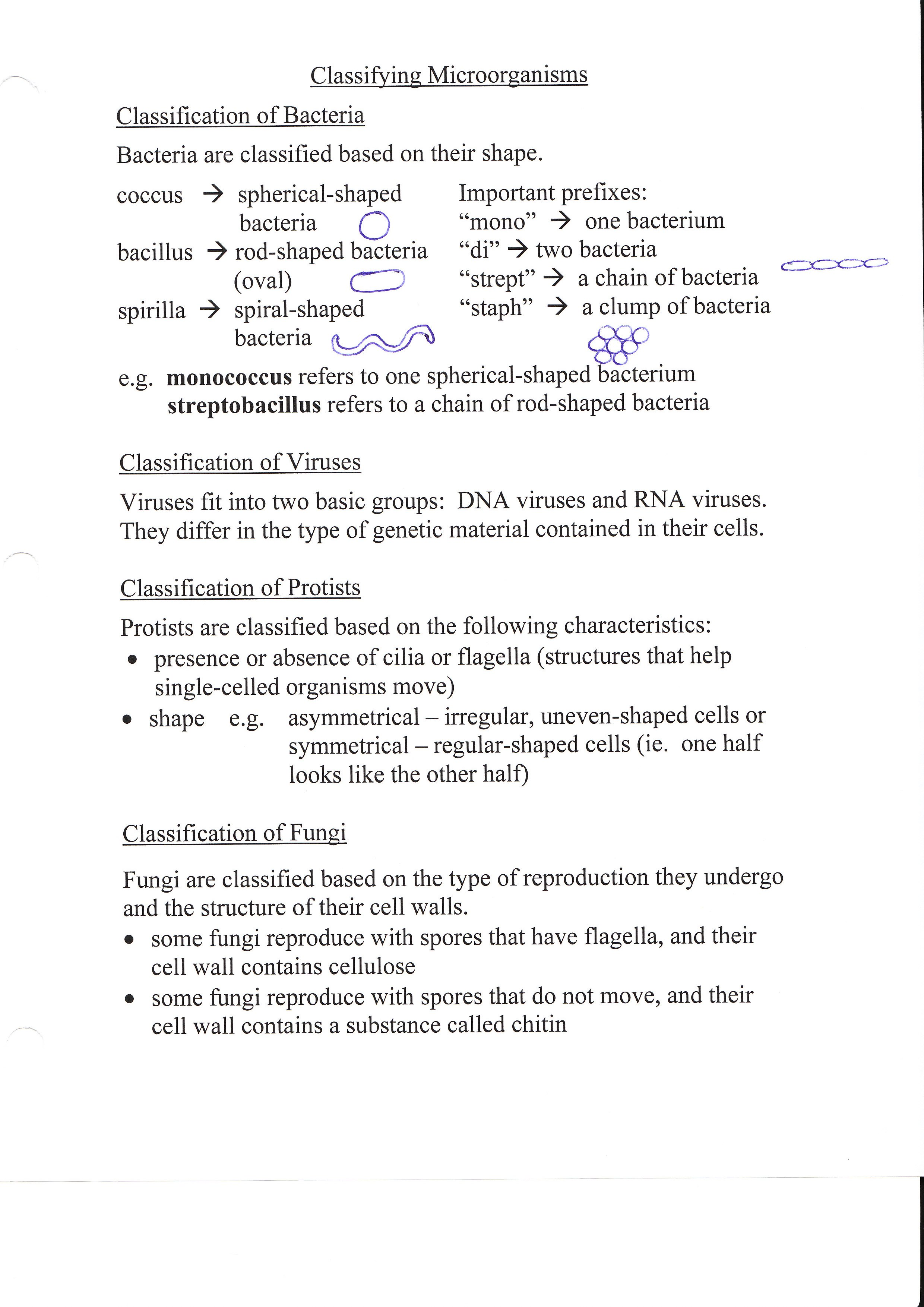 Worksheet Virus And Bacteria Worksheet Grass Fedjp