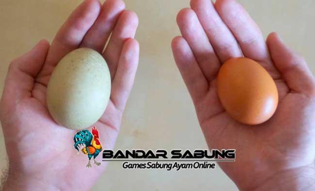 Tips Meningkatkan Produksi Telur Ayam Ataupun Bebek Secara Efektif Dan Efisien